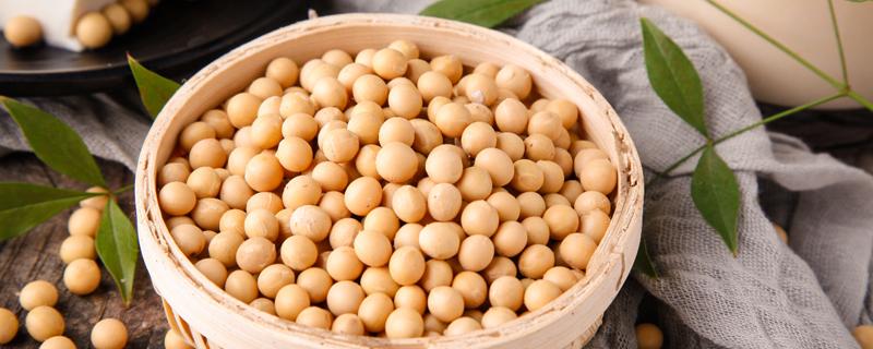 大豆是怎么生长的