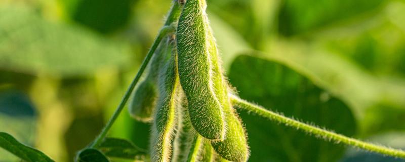 大豆种植时间和方法