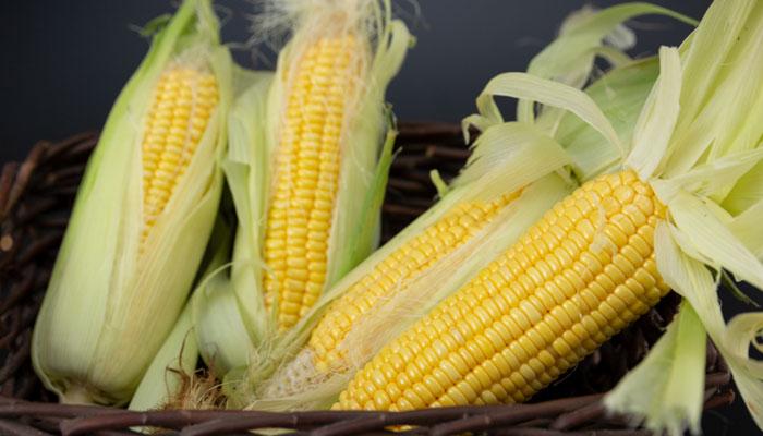 玉米种植方法步骤是什么
