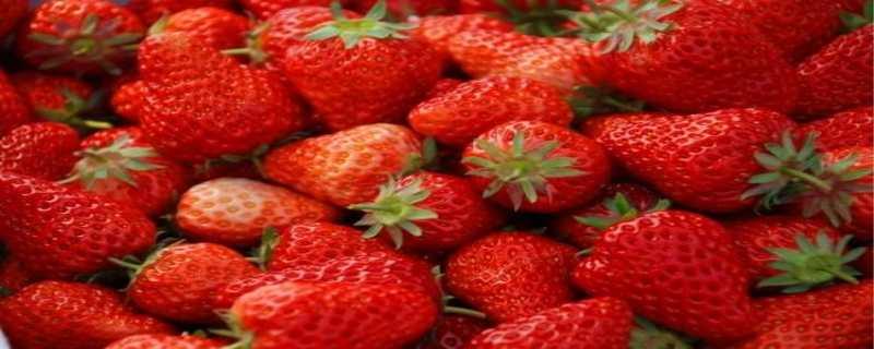 草莓什么时候种植最好