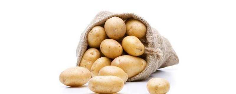 马铃薯是什么
